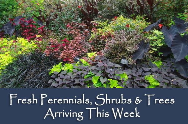 perennials, trees and shrubs