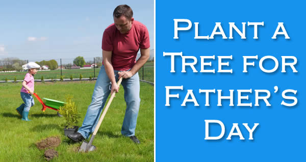 Plant a Tree for Father's Day