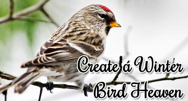 Winter bird haven