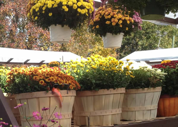 Hanging Baskets and Baskets
