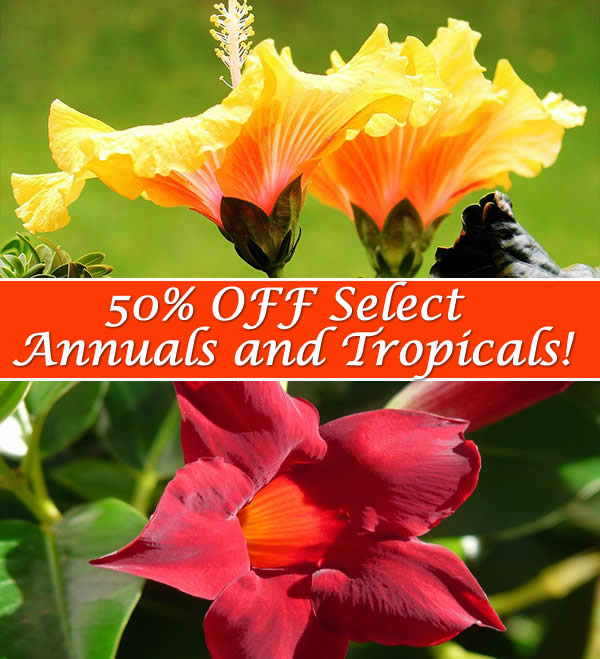 Summer Annuals and Tropicals