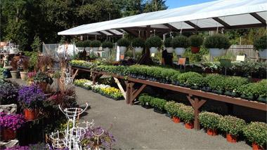 Home   Aceru0027s Florist U0026 Garden Center