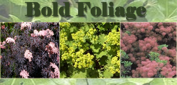 Bold Foliage - Newsletter April 20th 2017