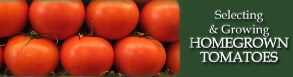 Selecting & Growing Homegrown Tomatoes