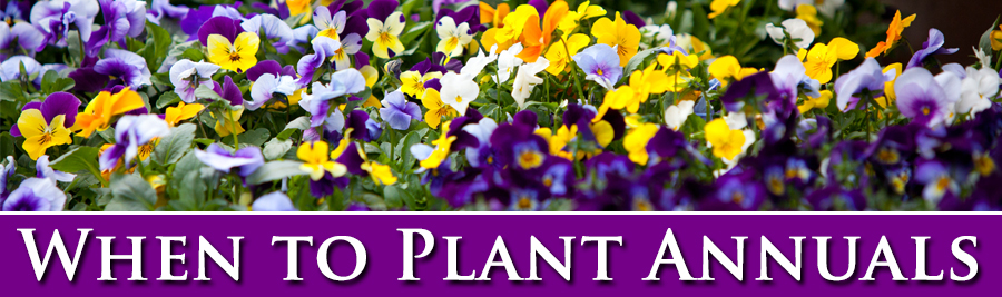 Win to plant annuals